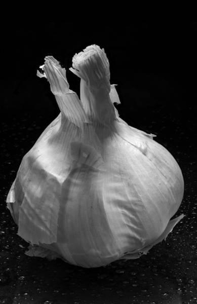 Wall Art - Photograph - Garlic Bulb B W by Steve Gadomski