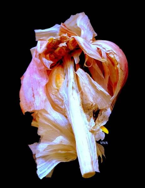 Photograph - Garlic Study by VIVA Anderson