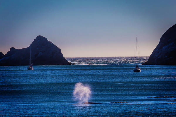 Blowhole Photograph - Gary Whale Breaching by Garry Gay