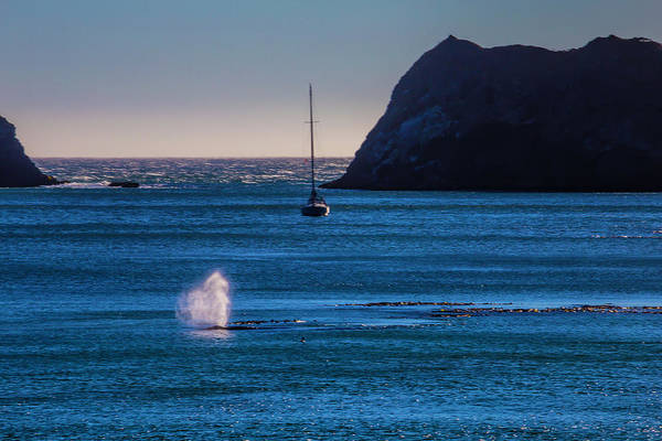 Blowhole Photograph - Gary Whale In Blue Water by Garry Gay