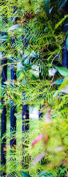 Photograph - Gate Fern by Stacey Rosebrock