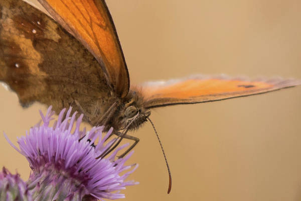 Photograph - Gatekeeper  by Wendy Cooper