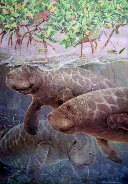Wall Art - Painting - Gathering In Tarpon Bay by Linda Thompson