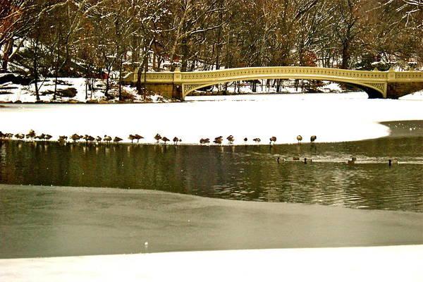 Gathering Of Ducks Art Print