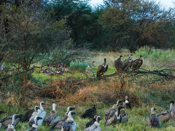 Photograph - Gathering Of Vultures by Karen Zuk Rosenblatt