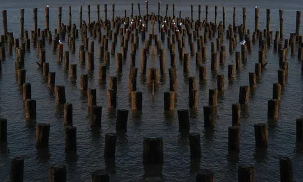 Photograph - Gathering On The Hudson by Leon deVose