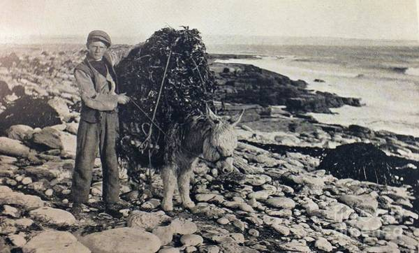 Photograph - Gathering Seaweed On Aran by Val Byrne