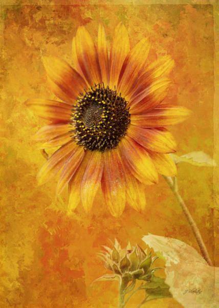 Photograph - Gathering Together - Autumn Art by Jordan Blackstone