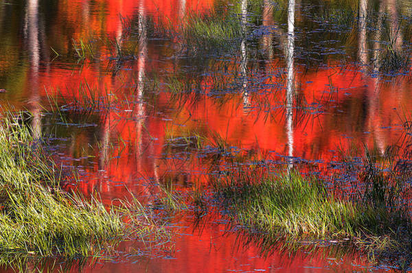 Photograph - Gatineau Marsh Fall Colors by Steve Somerville
