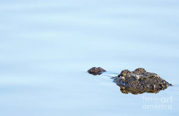 Alligators Wall Art - Photograph - Gator Country by DiFigiano Photography