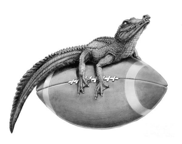 Gator Wall Art - Drawing - Gator Football by Murphy Elliott