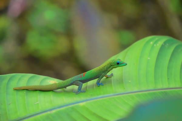 Photograph - Gecko On Leaf by Pamela Walton