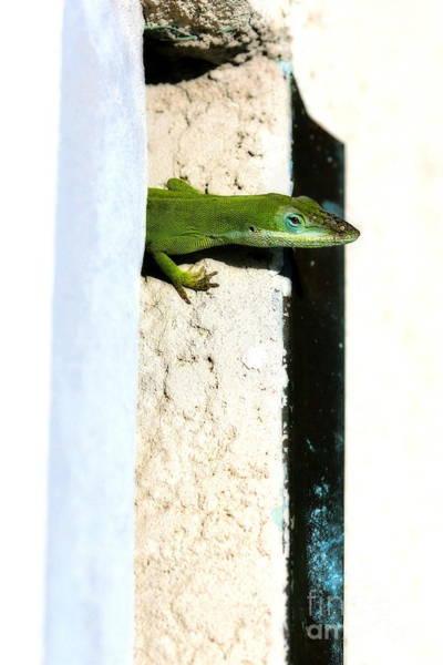 Photograph - Lizard On Stucco by Angela Rath