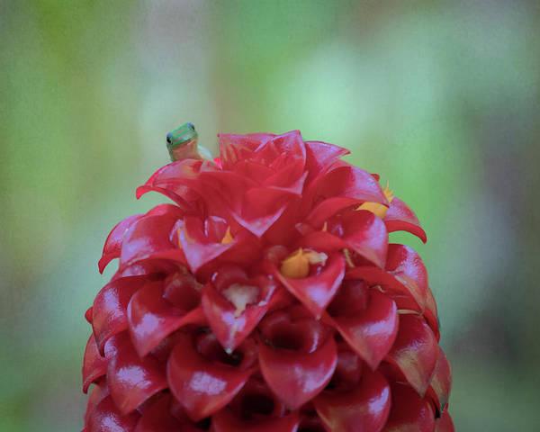 Photograph - Gecko Peeking  by Susan Rissi Tregoning