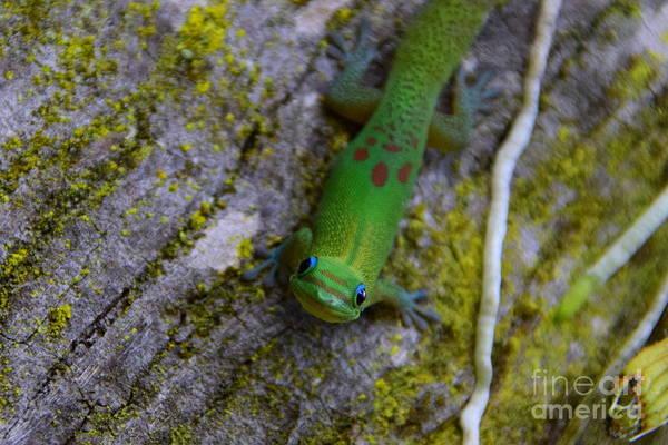 Gold Dust Photograph - Gecko Smiles by Jackson Kowalski