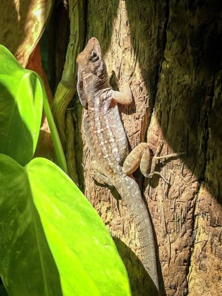 Photograph - Gecko by Terri Hart-Ellis