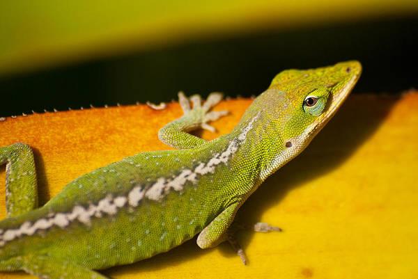 Allerton Garden Photograph - Gecko by Thorsten Scheuermann