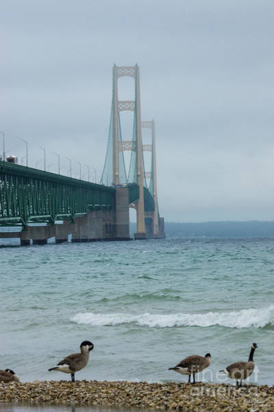 Michilimackinac Wall Art - Photograph - Geese At Mackinac Bridge by Jennifer White