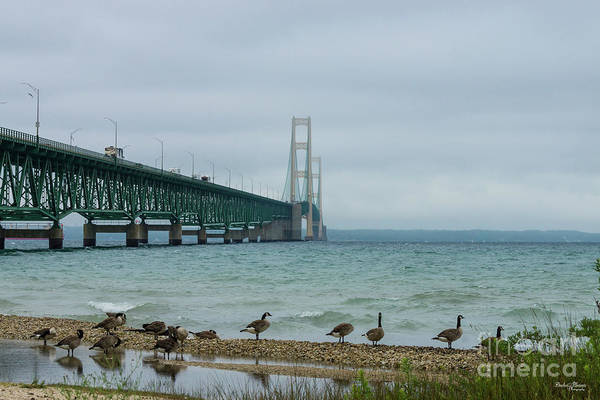 Michilimackinac Wall Art - Photograph - Geese At Mighty Mac by Jennifer White