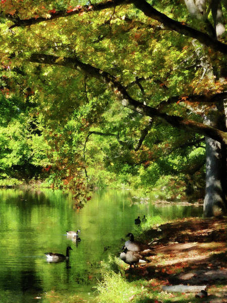 Photograph - Geese By Pond In Autumn by Susan Savad