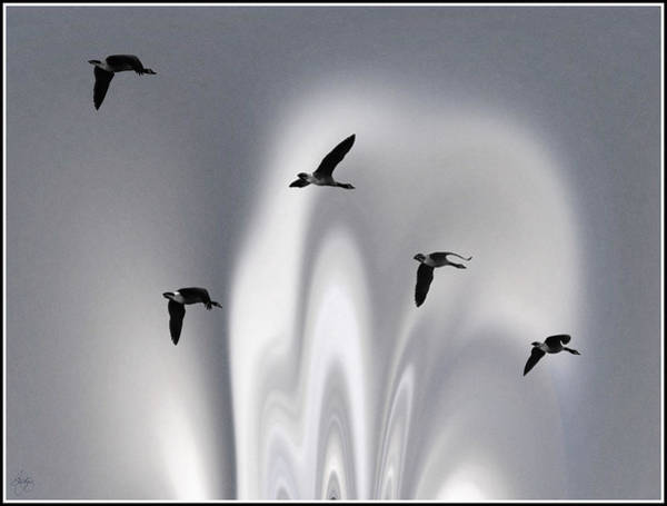 Photograph - Geese In A Blue Borealis by Wayne King