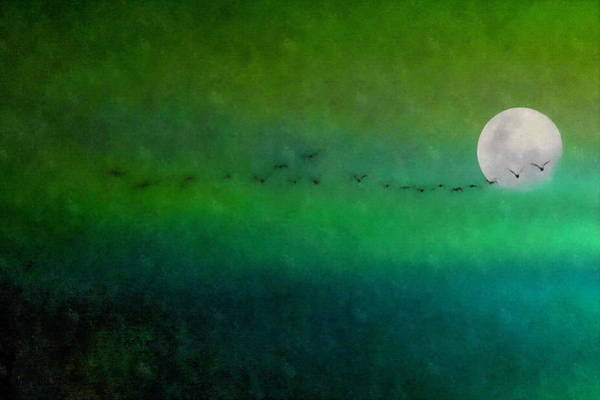Art Print featuring the photograph Geese In Flight  by Andrea Kollo