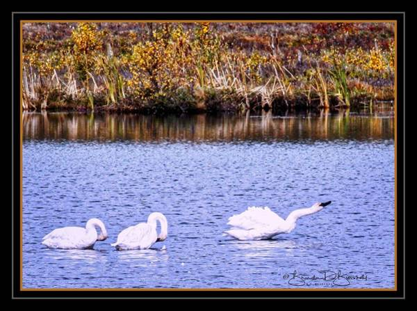 Wall Art - Photograph - Geese In The Fall by Brenda D Busskohl
