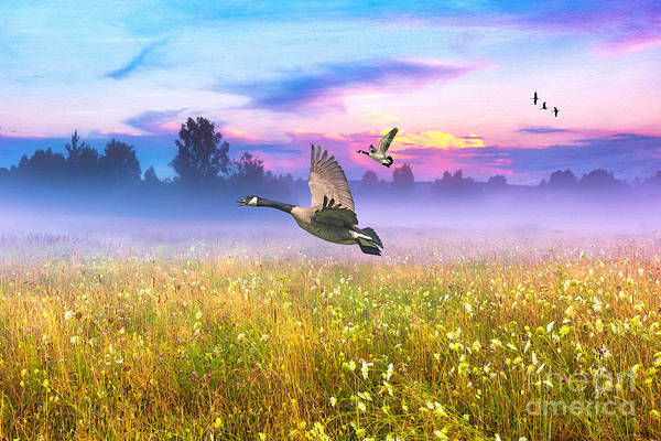 Geese In The Mist Art Print