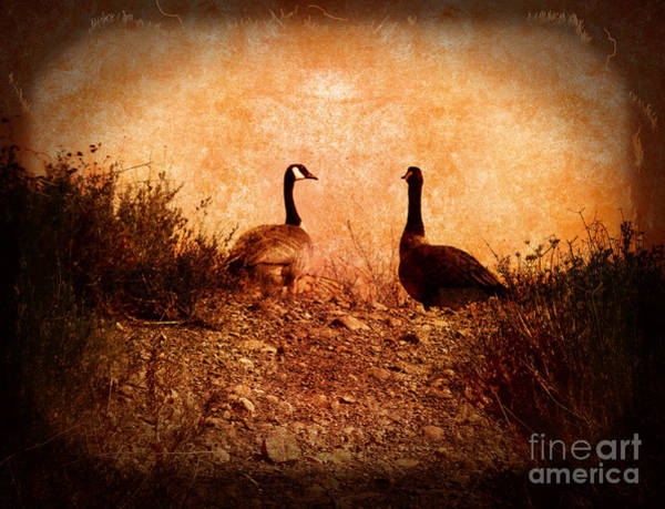 Canadian Geese Photograph - Geese On A Hill by Laura Iverson