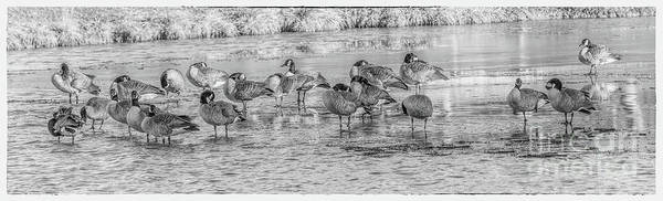 Frozen Lake Digital Art - Geese On Frozen Lake by Randy Steele