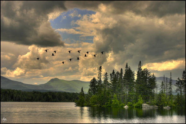 Photograph - Geese Over Jericho Lake by Wayne King