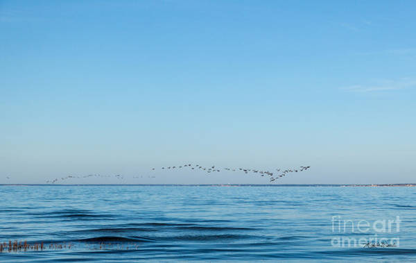 Photograph - Geese Over The Cape Cod Bay by Michelle Constantine