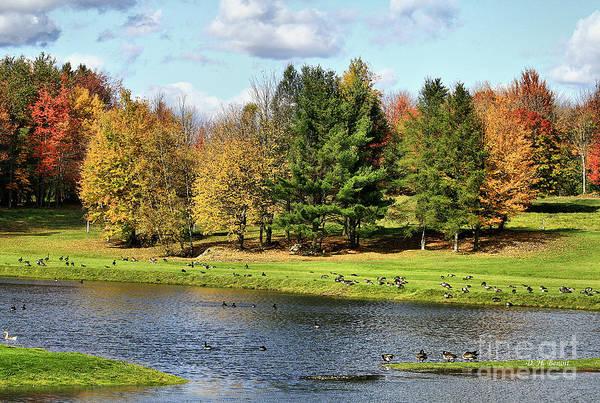 Photograph - Geese Sanctuary by Deborah Benoit
