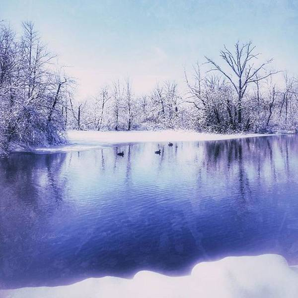Photograph - #geese #winter by Tricia Elliott