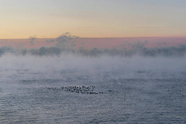 Photograph - Gelid Paddle - A Flock Of Ducks On Extremely Cold Lake Ontario by Georgia Mizuleva