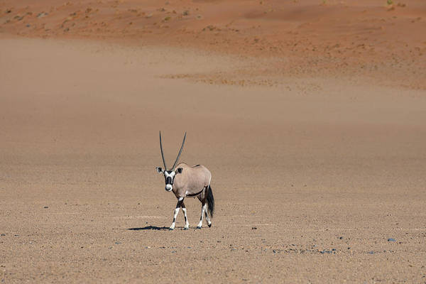 Wall Art - Photograph - Gemsbok - Namibia by Joana Kruse