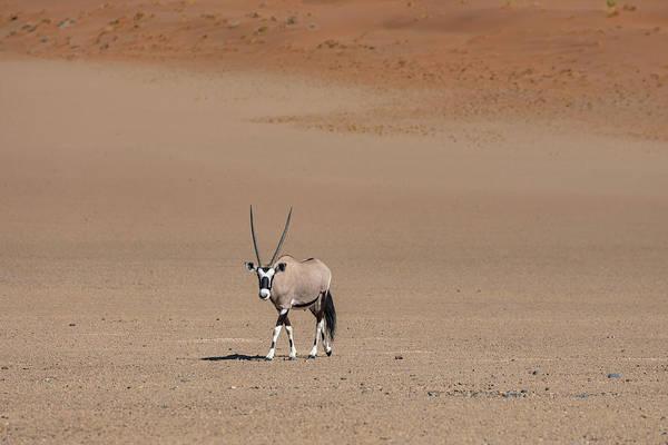 Sossusvlei Photograph - Gemsbok - Namibia by Joana Kruse