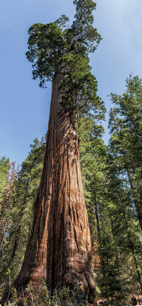 Photograph - General Grant Sequoia by Belinda Greb