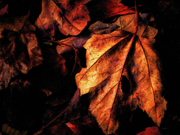 Photograph - Gentle Autumn by Bob Orsillo