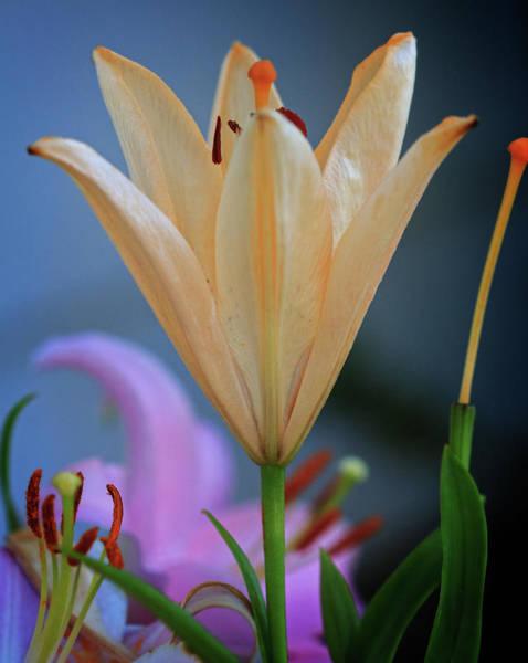 Lewes Photograph - Gentle Flower by Robert Pilkington