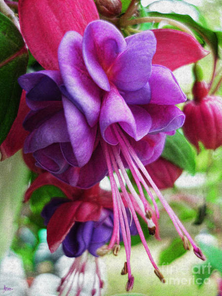 Photograph - Gentle Fuschia by Jeff Breiman
