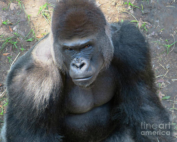 Houston Zoo Photograph - Gentle Giant by TN Fairey
