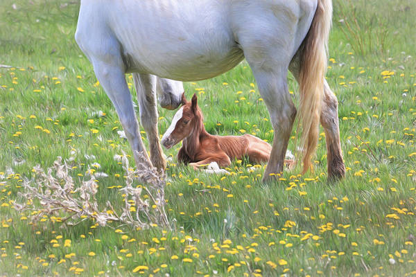 Foal Photograph - Gentle Nuzzle by Donna Kennedy