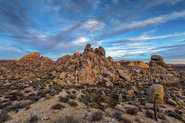 Yucca Plants Photograph - Geology 101 by Peter Tellone