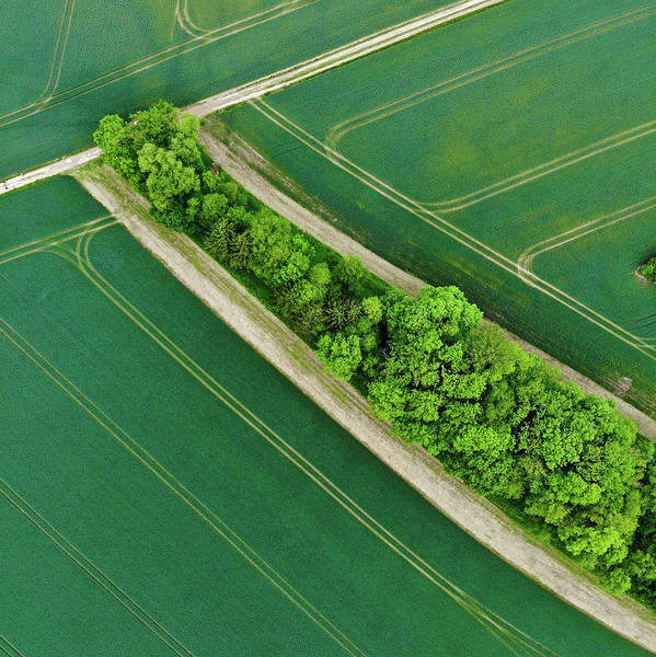 Photograph - Geometric Landscape 08 Trees And Green Fields In Germany by Matthias Hauser