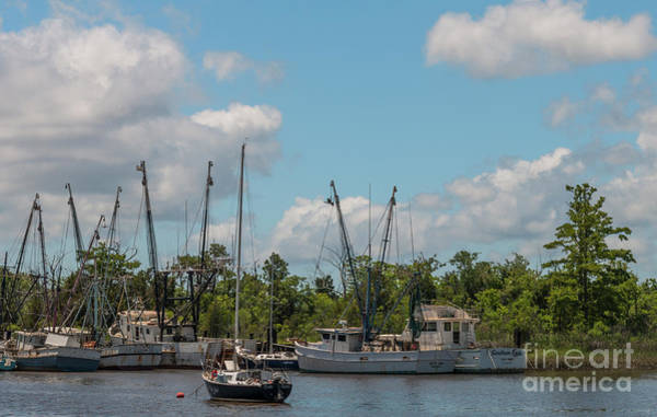 Photograph - Georgetown Shrimping Festival by Dale Powell