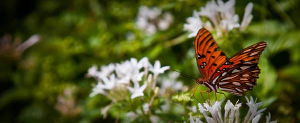 Wall Art - Photograph - Georgia Butterfly by Patrick  Flynn