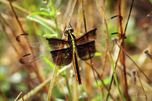 Photograph - Georgia On My Mind Ray Charles Dragonfly Art by Reid Callaway
