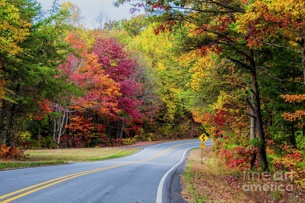 Photograph - Georgia Scenic Byway by Barbara Bowen