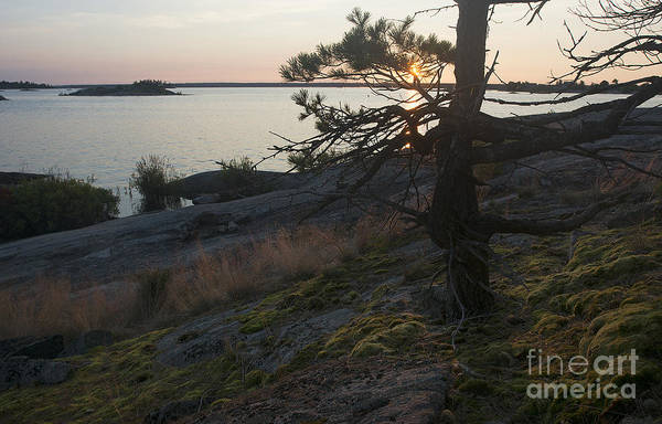Photograph - Georgian Bay Sunrise-moss 4253 by Steve Somerville